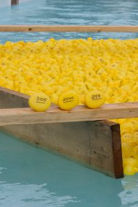hundreds rubber ducks in the pool for the rubber duck race